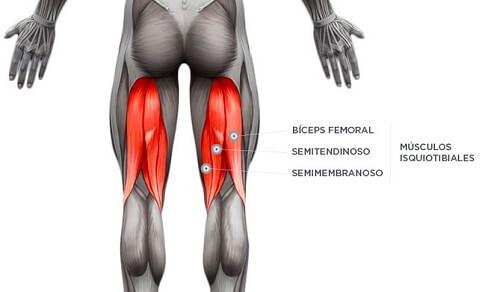 Imagen posterior de los MMII en la que se señalan los tres músculos que componen los isquiotibiales: bíceps femoral, semitendinoso y semimebranoso. Los isquiotibiales son los músculos que mayor número de lesiones musculares sufren en el fútbol